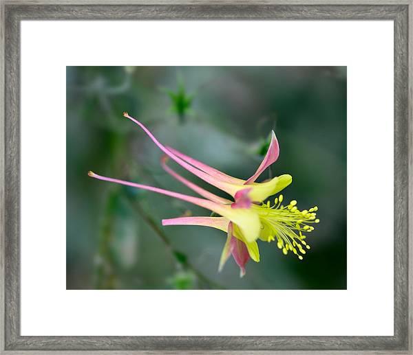 120529_027 Framed Print