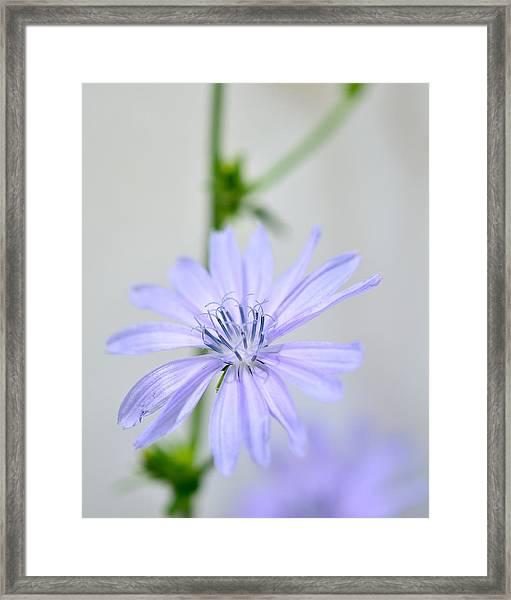120705_021 Framed Print