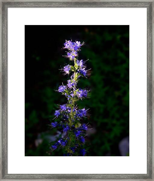 120705_059 Framed Print