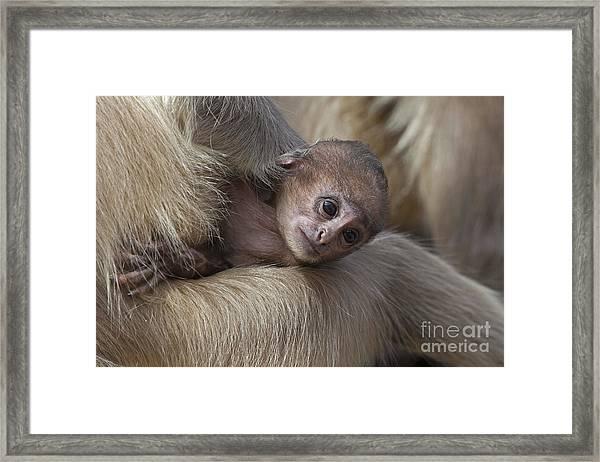 120820p269 Framed Print