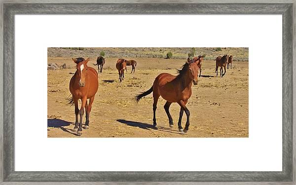121 Framed Print by Wynema Ranch