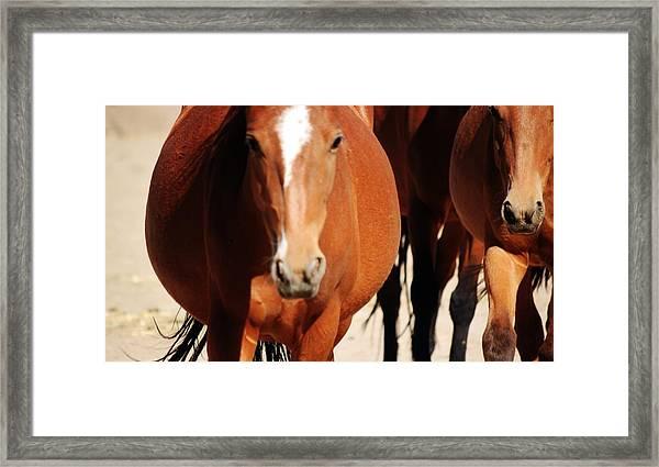 123 Framed Print by Wynema Ranch