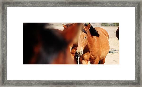 125 Framed Print by Wynema Ranch