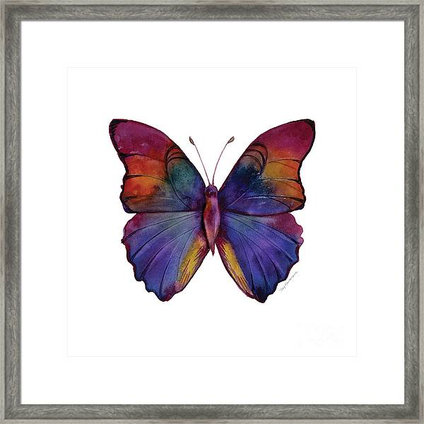 13 Narcissus Butterfly Framed Print
