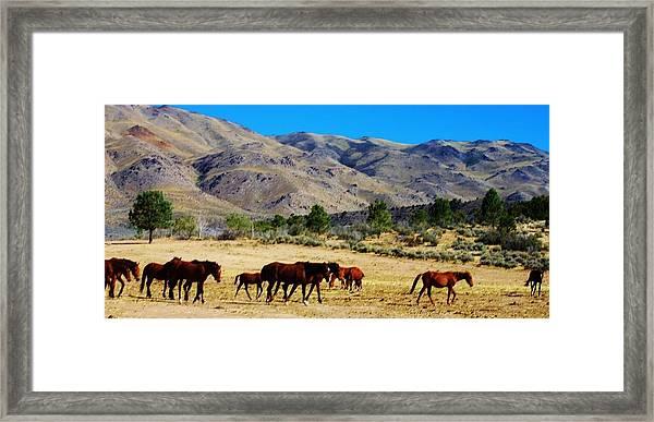 130 Framed Print by Wynema Ranch