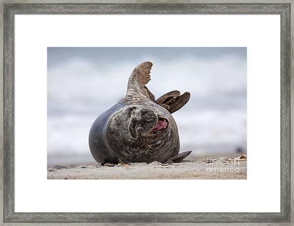 130201p148 Framed Print