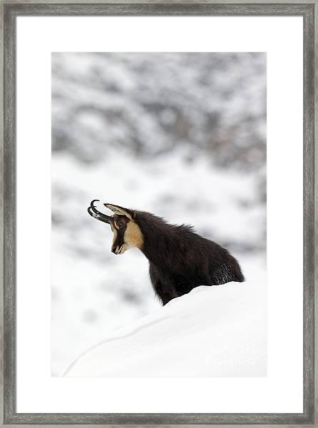 130201p229 Framed Print
