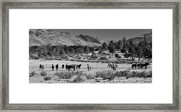 131 Framed Print by Wynema Ranch