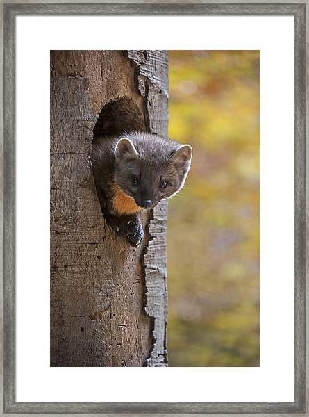 131114p020 Framed Print