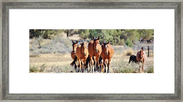 133 Framed Print by Wynema Ranch