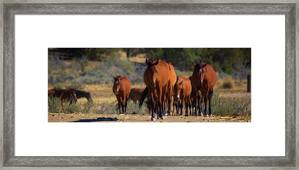 134 Framed Print by Wynema Ranch
