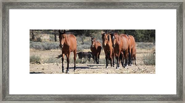 135 Framed Print by Wynema Ranch