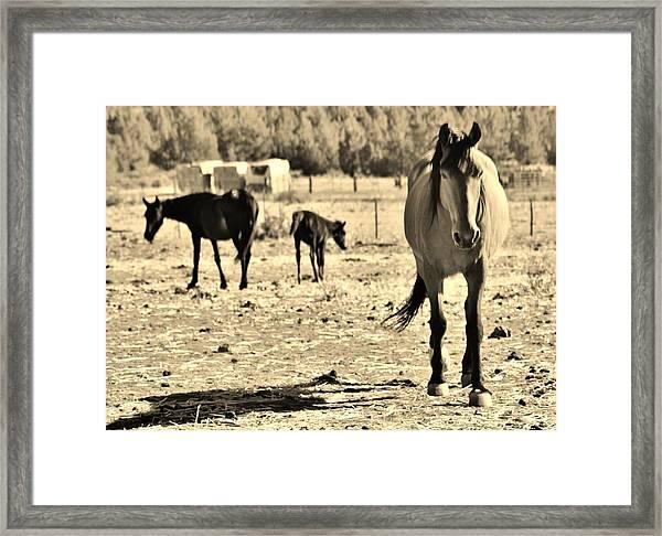 136 Framed Print by Wynema Ranch