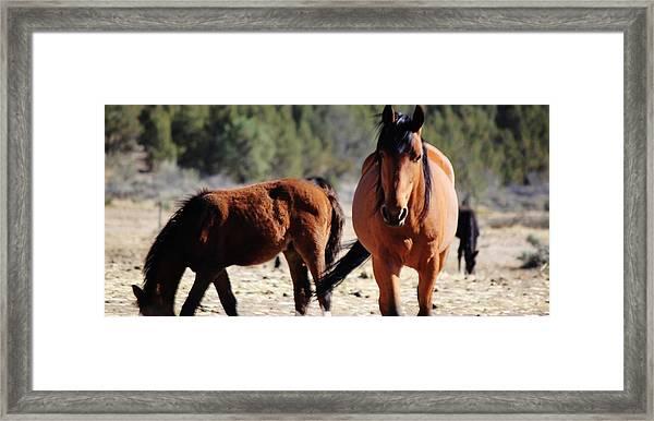 138 Framed Print by Wynema Ranch