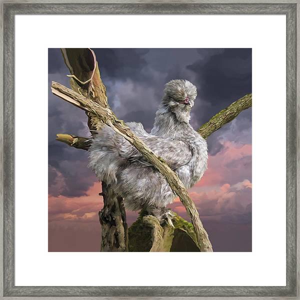 14. Cuckoo Bush Framed Print