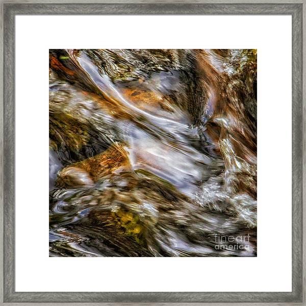 Fine Art Nature Photography By Joanne Bartone Framed Print