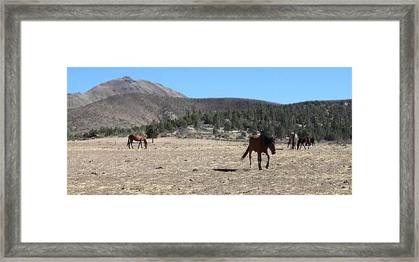 140 Framed Print by Wynema Ranch