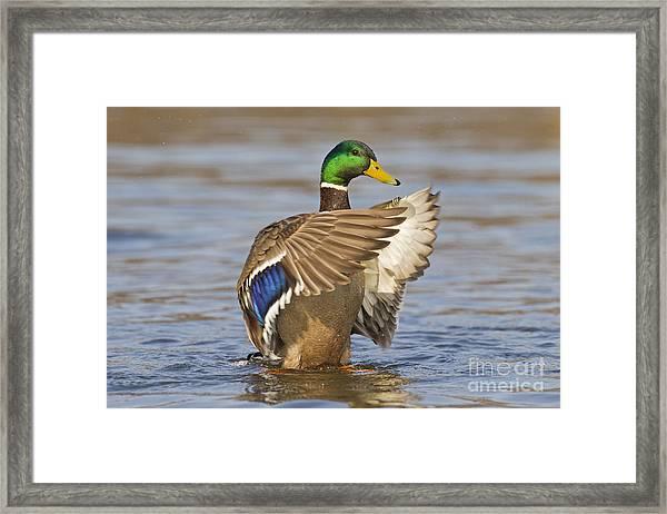 140314p301 Framed Print