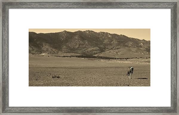 143 Framed Print by Wynema Ranch