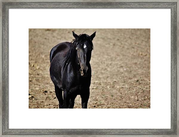 145 Framed Print by Wynema Ranch
