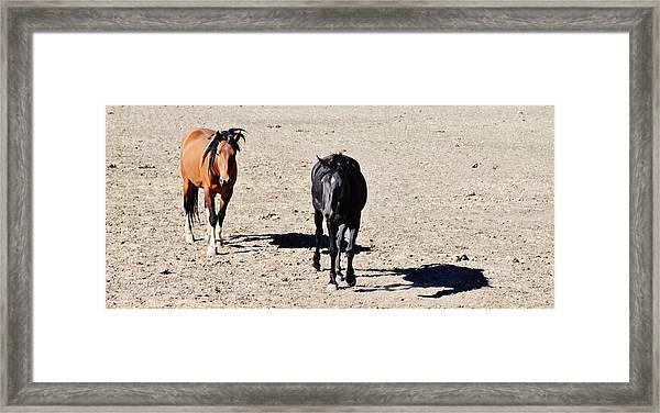 147 Framed Print by Wynema Ranch