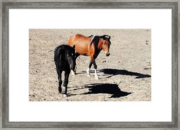 148 Framed Print by Wynema Ranch