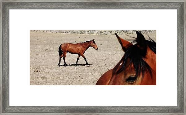 149 Framed Print by Wynema Ranch