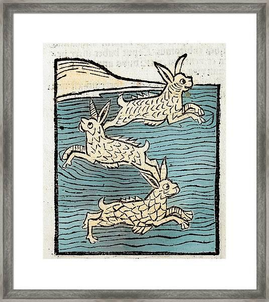 1491 Sea Hares From Hortus Sanitatis Framed Print by Paul D Stewart