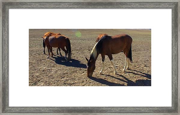 152 Framed Print by Wynema Ranch