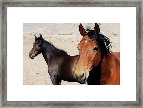 153 Framed Print by Wynema Ranch
