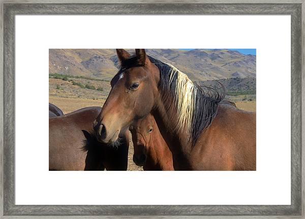 154 Framed Print by Wynema Ranch