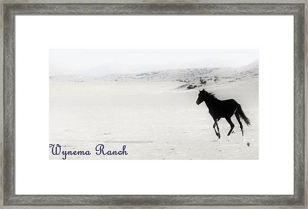 156 Framed Print by Wynema Ranch