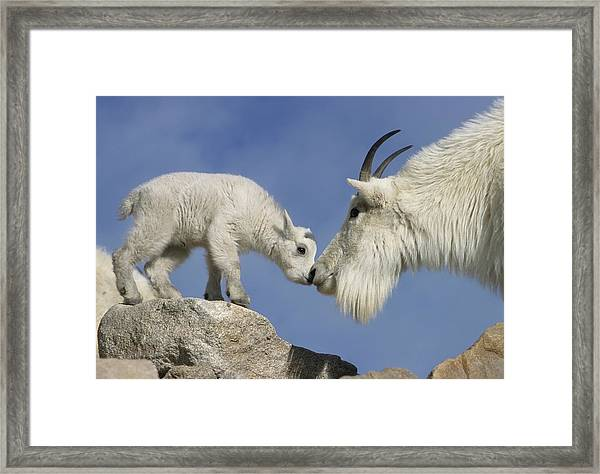 Usa, Colorado, Mount Evans Framed Print