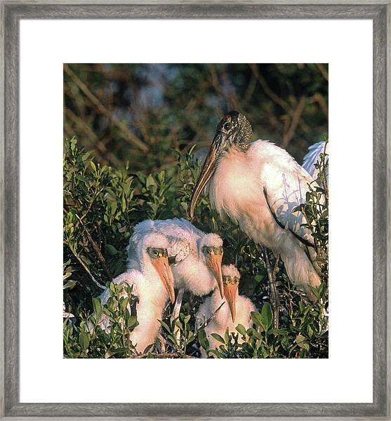 Usa, Florida, Everglades National Park Framed Print