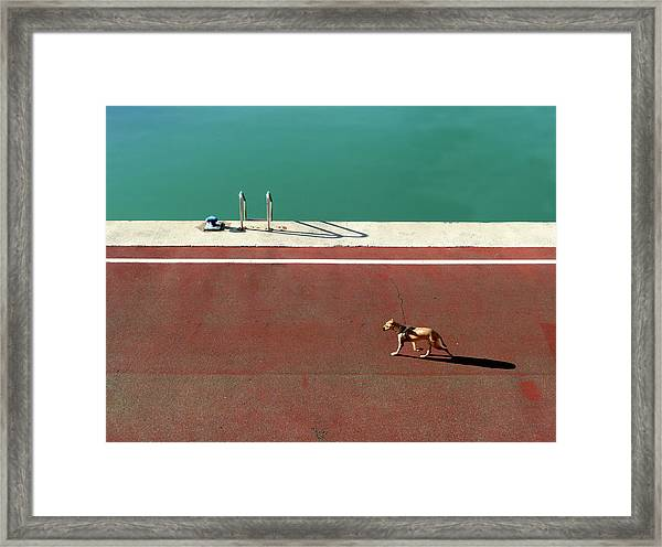 165/15 Framed Print by Paolo Luxardo