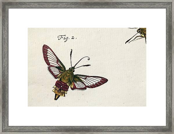 1744 Roesel Von Rosenhof Bee Hawk Moth Framed Print