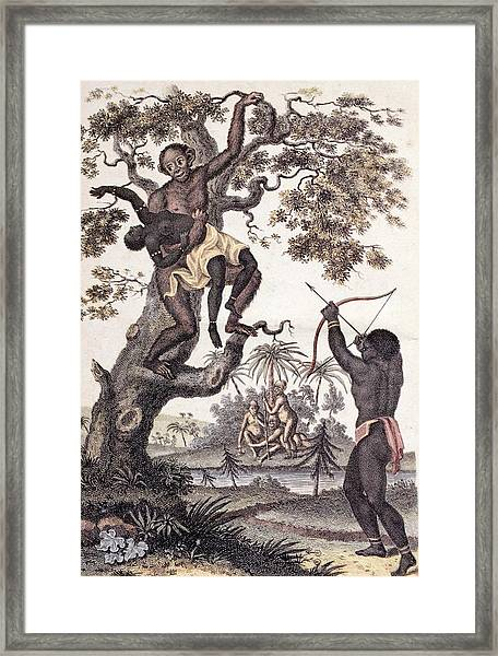 1795 Ape Abducts Woman Sibly Chimp Orang Framed Print