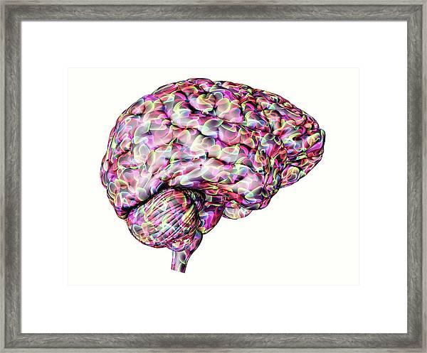 Human Brain Framed Print