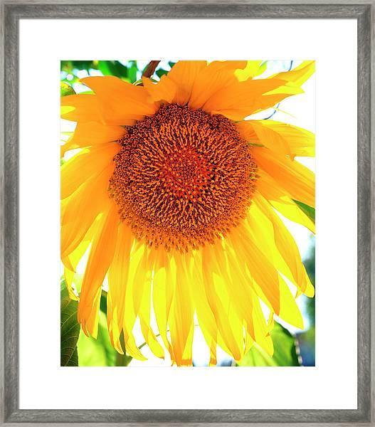 Usa, California, San Diego Framed Print by Jaynes Gallery