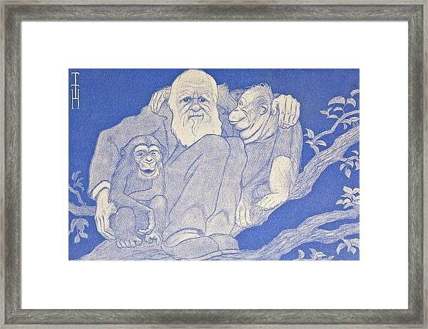 1909 Cartoon Darwin With Apes Detail Framed Print
