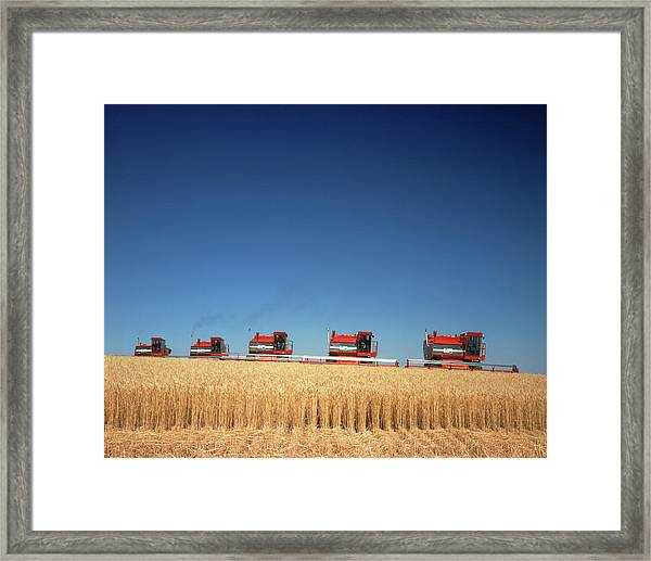 1970s Five Massey Ferguson Combines Framed Print