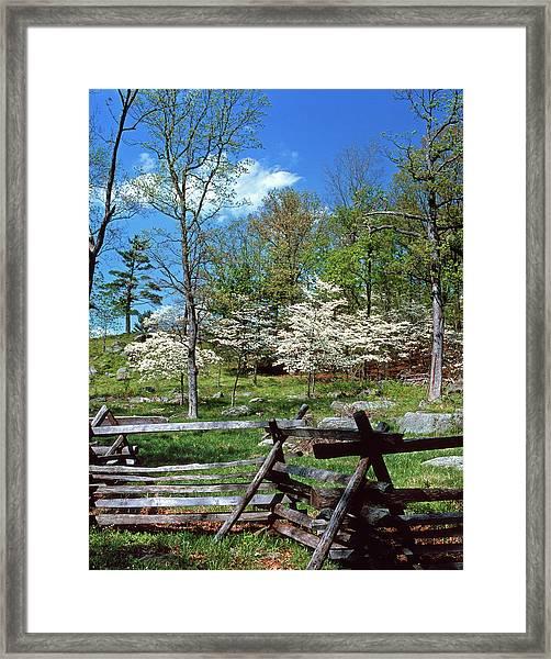 1980s Spring Scenic Dogwood Blossoms Framed Print