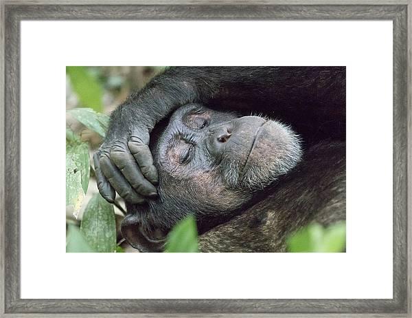 Africa, Uganda, Kibale Forest National Framed Print