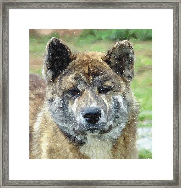 Akita Dog Portrait Framed Print by Olde Time  Mercantile