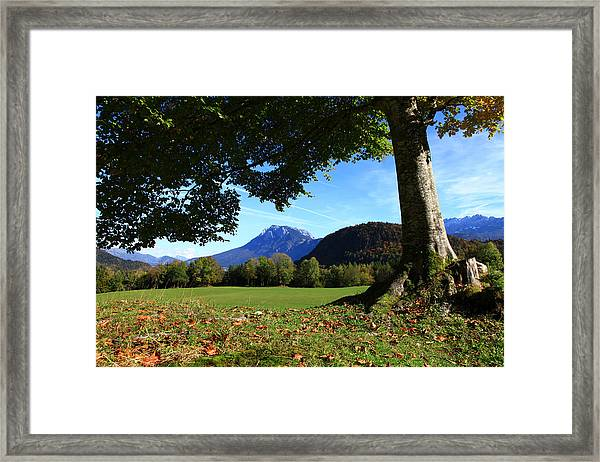 Alpine Tree Framed Print by Falko Follert