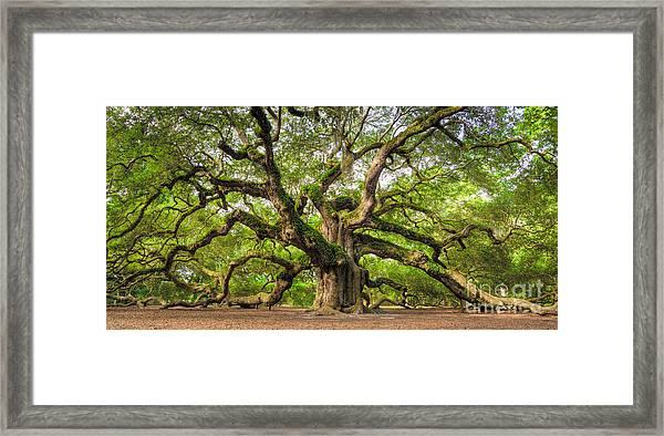 Angel Oak Tree Of Life Framed Print