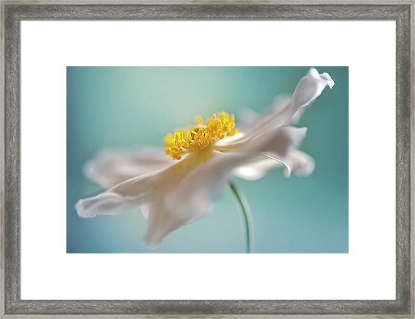 Autumn Reverie Framed Print
