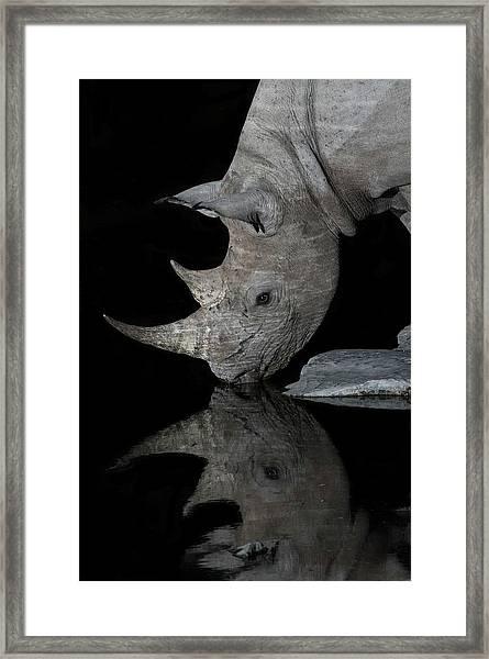 Black Rhinoceros At Night Framed Print by Tony Camacho/science Photo Library