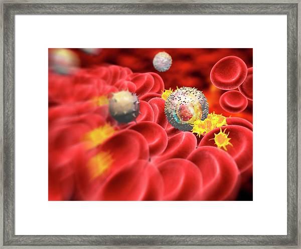 Blood Cells Framed Print by Pasieka
