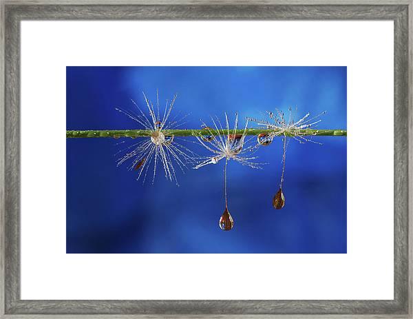Blue Drops Of Life Framed Print